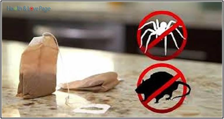 repelente contra ratos e aranhas
