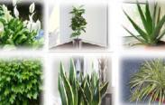 plantas filtro de ar