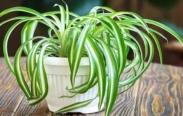plantas purificadoras de ar