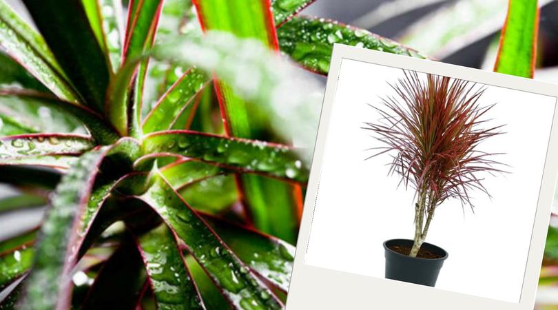 Plantas purificadoras do ar