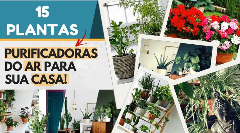 15 Plantas purificadoras de ar para sua casa ou apartamento!