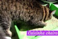 tirar cheiro da caixa de areia do gato