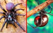 As 9 Aranhas Mais perigosas do mundo