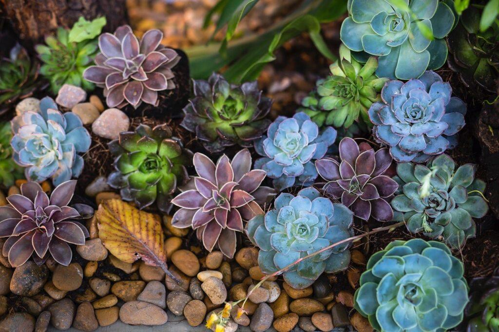 Como cuidar de suculentas – Conheça as melhores espécies para ter em casa